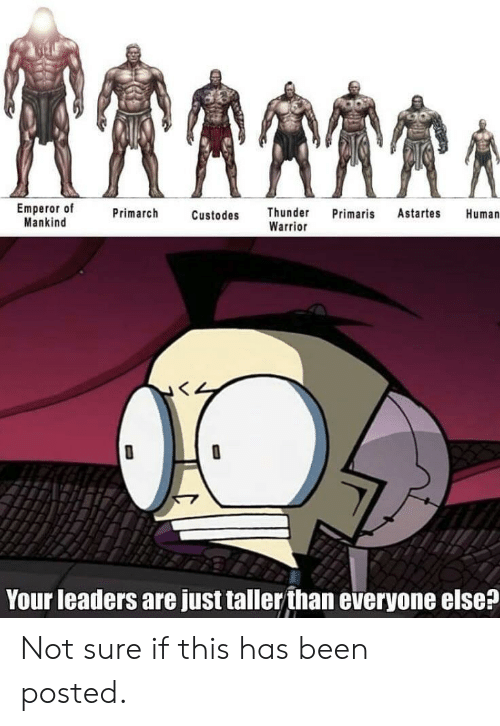 Been, Warrior, and Human: Emperor of  Mankind  Primarch  Custodes Thunder Primaris Astartes Human  Warrior  Your leaders are just taller than everyone else? Not sure if this has been posted.