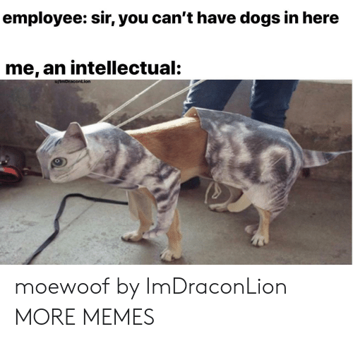 Dank, Dogs, and Memes: employee: sir, you can't have dogs in here  me, an intellectual:  conLionn moewoof by ImDraconLion MORE MEMES