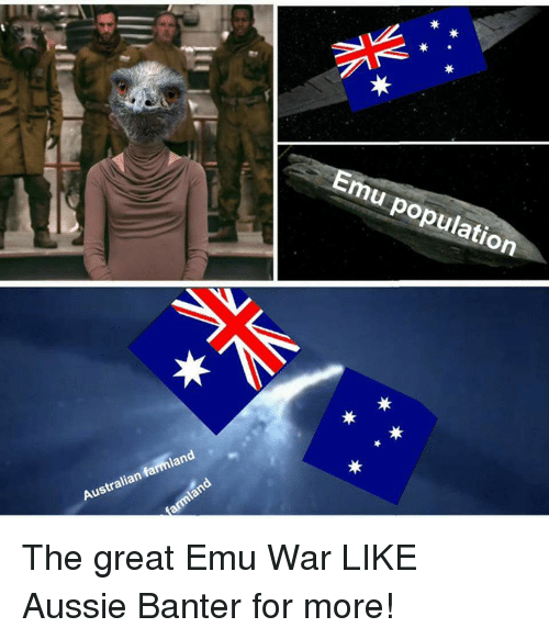 emu population australian farmland the great emu war like aussie