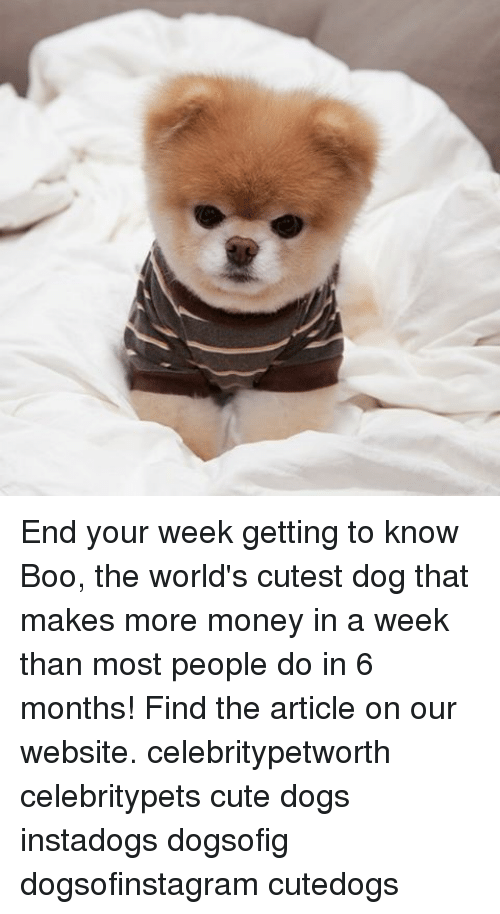 Must see Boo Army Adorable Dog - end-your-week-getting-to-know-boo-the-worlds-cutest-16014206  Perfect Image Reference_104270  .png