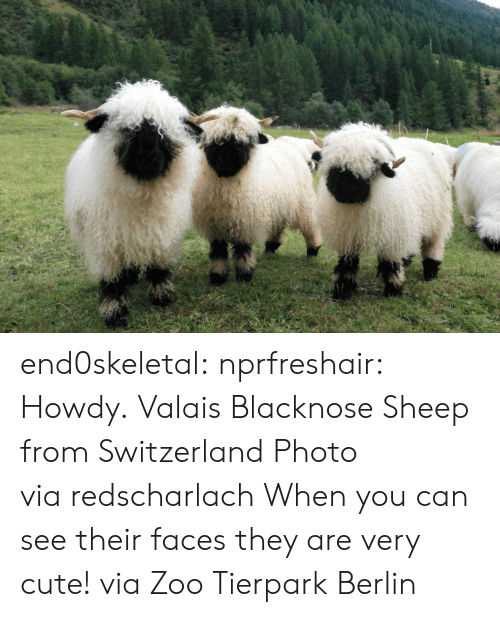 Cute, Tumblr, and Twitter: end0skeletal:  nprfreshair:  Howdy. Valais Blacknose Sheep from Switzerland Photo via redscharlach  When you can see their faces they are very cute! via Zoo Tierpark Berlin