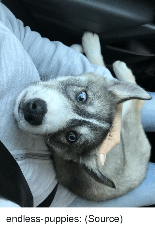 Puppies, Tumblr, and Blog: endless-puppies:  (Source)
