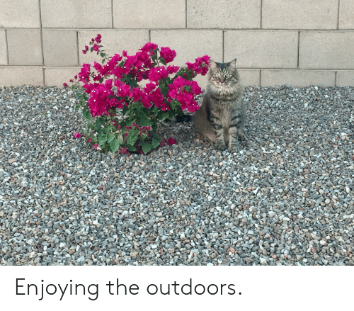 Enjoying, Outdoors, and The: Enjoying the outdoors.