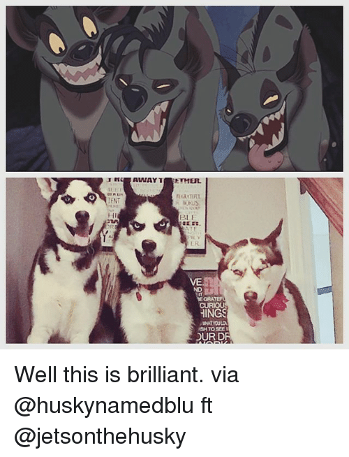 Memes, Brilliant, and 🤖: ENT  BL F  ER  ND  SH TO SEE  OUR DR Well this is brilliant. via @huskynamedblu ft @jetsonthehusky