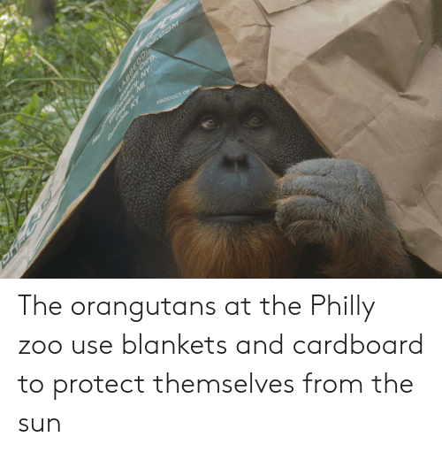 Usa, Sun, and Zoo: EPCE  PRODUCT OF USA  N6mgsuaue  JOOSAOnpo. qs  Caspian, MI  Nart The orangutans at the Philly zoo use blankets and cardboard to protect themselves from the sun