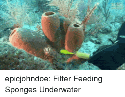 Tumblr, Blog, and Com: epicjohndoe:  Filter Feeding Sponges Underwater