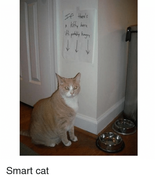 Cats, Memes, and 🤖: ere s  t kafty here Smart cat