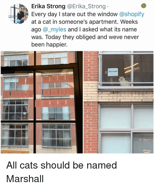 Cats, Memes, and Today: Erika Strong @Erika_Strong  Every day I stare out the window @shopify  at a cat in someone's apartment. Weeks  ago @_myles and I asked what its name  was. Today they obliged and weve never  been happier.  Marshall All cats should be named Marshall