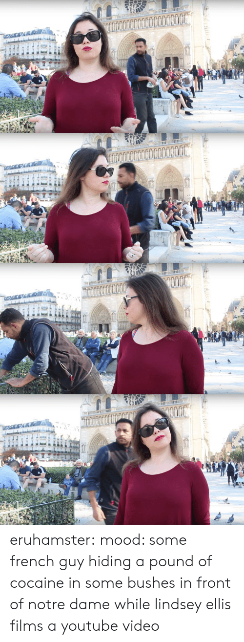 Mood, Target, and Tumblr: eruhamster: mood: some french guy hiding a pound of cocaine in some bushes in front of notre dame while lindsey ellis films a youtube video
