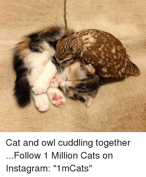 "Memes, 🤖, and Owl: es Cat and owl cuddling together    ...Follow 1 Million Cats on Instagram: ""1mCats"""