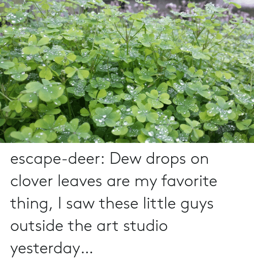 Deer, Saw, and Tumblr: escape-deer: Dew drops on clover leaves are my favorite thing, I saw these little guys outside the art studio yesterday…