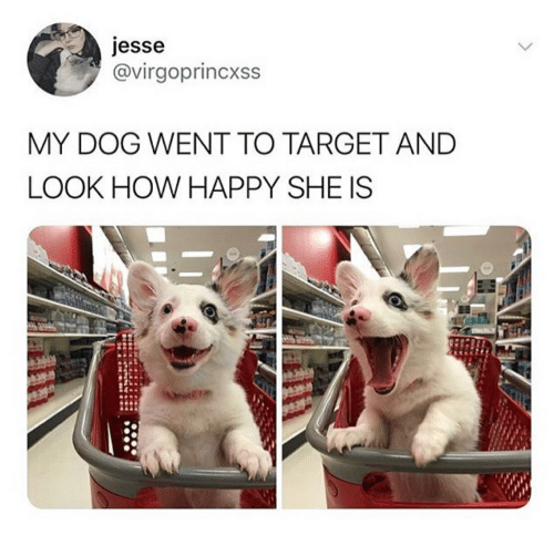 Target Happy And How Esse Virgoprincxss MY DOG WENT TO TARGET AND