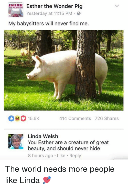 Funny, World, and Never: Esther the Wonder Pig  Yesterday at 11:15 PM  3  My babysitters will never find me.  15.6K  414 Comments 726 Shares  ME Linda Welsh  You Esther are a creature of great  beauty, and should never hide  8 hours ago Like Reply The world needs more people like Linda 💘
