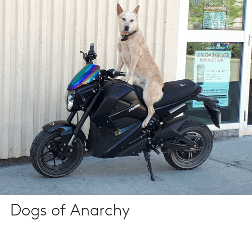 Dogs, Models, and Text: ET THE SCOOP ON GREAT OFFERS  ROM CANADA'S GARAGE  Text AUTO to 38667  rom Caradian Tire Auto  ent right to your phoner  CE ALL MAKES AND MODELS Dogs of Anarchy