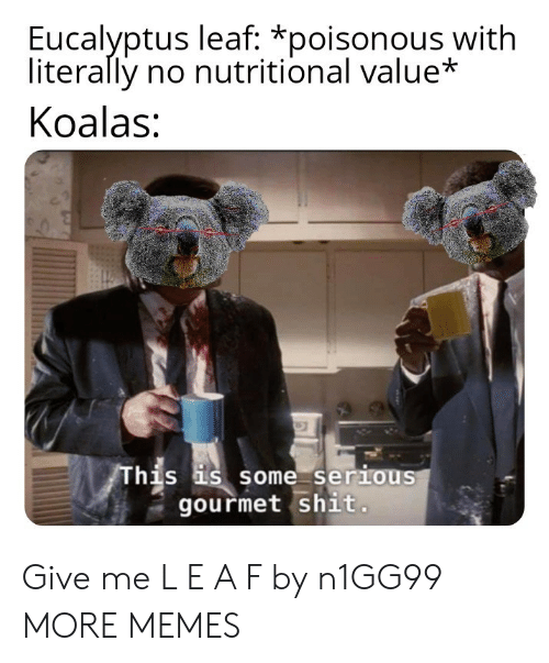 Dank, Memes, and Shit: Eucalyptus leaf: *poisonous with  literally no nutritional value*  Koalas:  his s some serious  gourmet shit Give me L E A F by n1GG99 MORE MEMES