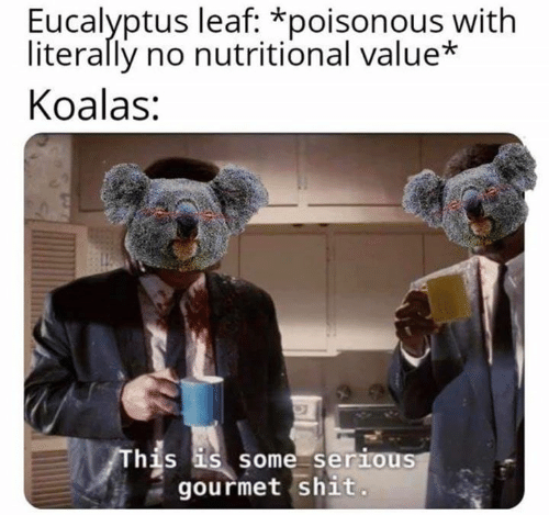 Shit, Leaf, and Eucalyptus: Eucalyptus leaf: *poisonous with  literally no nutritional value*  Koalas:  his is some seriouS  gourmet shit