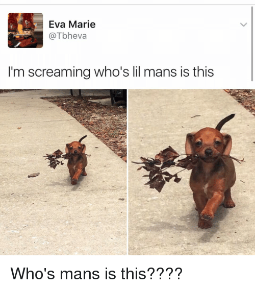 Image result for whose mans is this dog