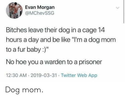 "Be Like, Hoe, and Twitter: Evan Morgan  @MChevSSG  Bitches leave their dog in a cage 14  hours a day and be like ""I'm a dog mom  to a fur baby:  No hoe you a warden to a prisoner  12:30 AM 2019-03-31 Twitter Web App Dog mom."