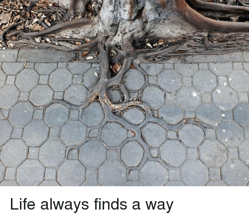 Life Always Finds A Way