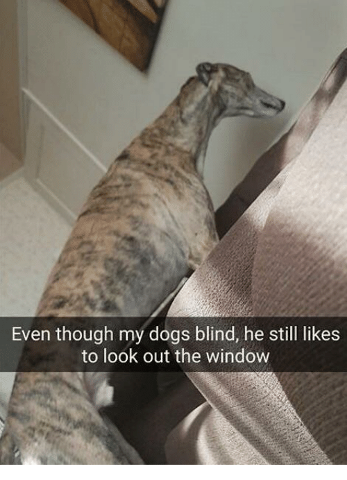 dog proof blinds pet friendly dogs dank memes and looking even though my dogs blind he still though my dogs blind he still likes to look out the window