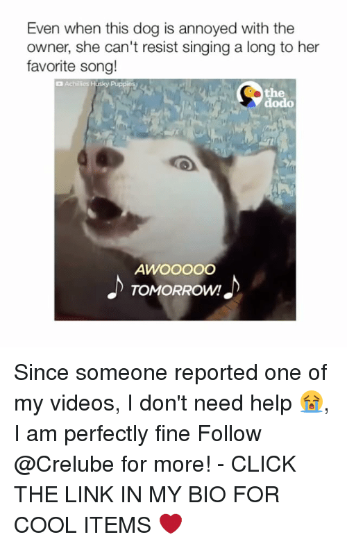 Click, Memes, and Singing: Even when this dog is annoyed with the  owner, she can't resist singing a long to her  favorite song!  Achillies Husky Puppi  the  dodo  AWOOOOO  TOMORROW! Since someone reported one of my videos, I don't need help 😭, I am perfectly fine Follow @Crelube for more! - CLICK THE LINK IN MY BIO FOR COOL ITEMS ❤️