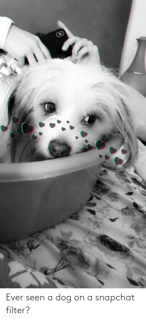 Snapchat, Dog, and Filter: Ever seen a dog on a snapchat filter?