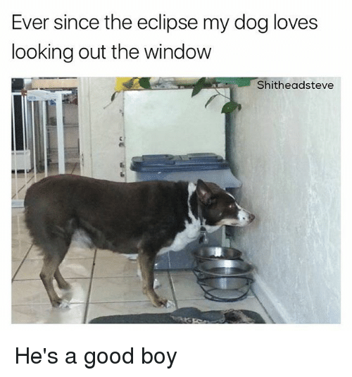 Eclipse, Good, and Dank Memes: Ever since the eclipse my dog loves  looking out the window  Shitheadsteve He's a good boy