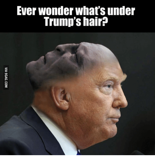 Trump Hair, Trumps Hair, and Can I Comb Over: Ever Wonder Whatsunder  Trump's hair