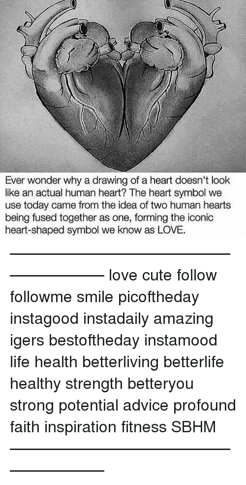 Ever Wonder Why A Drawing Of A Heart Doesnt Look Like An Actual
