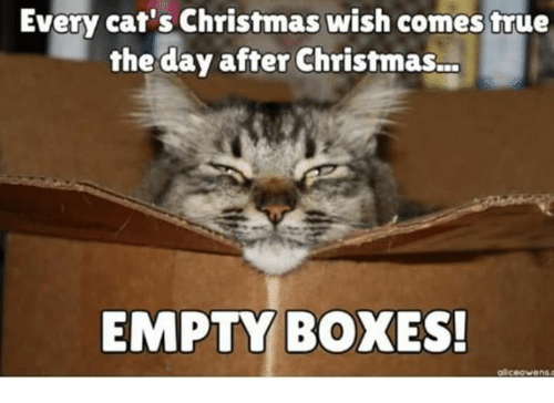 Day After Christmas.Every Cat S Christmas Wish Comes True The Day After
