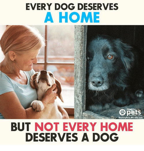 Memes, 🤖, and Mercola: EVERY DOG DESERVES  A HOME  Healthy  Healthy Pets. Mercola.com  BUT NOT EVERY HOME  DESERVES A DOG