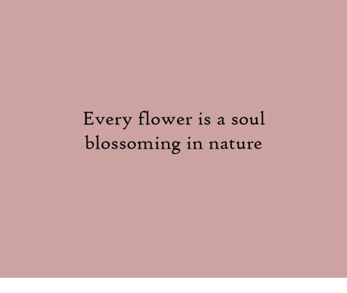 Flower, Nature, and Soul: Every flower is a soul  blossoming in nature