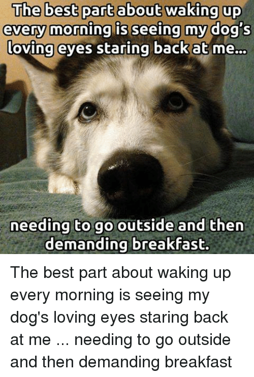 Dogs, Memes, and Best: every morning is seeing my dog's  oving eyes staring back at me...  needing to go outside and then  demanding breakfast. The best part about waking up every morning is seeing my dog's loving eyes staring back at me ... needing to go outside and then demanding breakfast