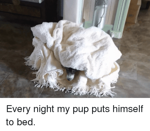 Pup, Bed, and  Night: Every night my pup puts himself to bed.