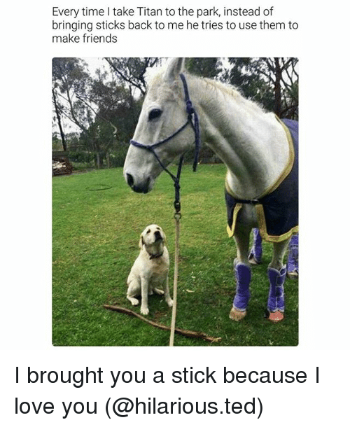 Friends, Funny, and Love: Every time I take Titan to the park, instead of  bringing sticks back to me he tries to use them to  make friends I brought you a stick because I love you (@hilarious.ted)