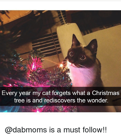 Christmas, Memes, and Christmas Tree: Every year my cat forgets what a Christmas  tree is and rediscovers the wonder. @dabmoms is a must follow!!