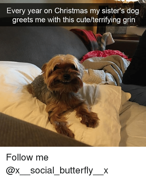 Christmas, Cute, and Memes: Every year on Christmas my sisters dog  greets me with this cute/territying grin Follow me @x__social_butterfly__x