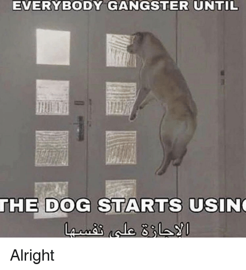 Everybody Gangster Until The Dog Starts Usin Alright Meme On Meme