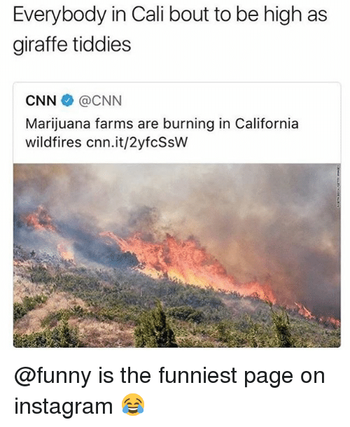 cnn.com, Funny, and Instagram: Everybody in Cali bout to be high as  giraffe tiddies  CNN@CNN  Marijuana farms are burning in California  wildfires cnn.it/2yfcSsW @funny is the funniest page on instagram 😂