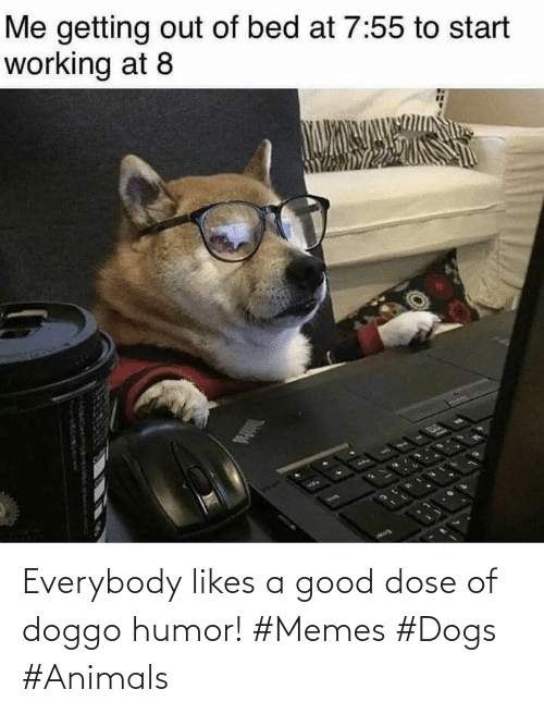 Animals, Dogs, and Memes: Everybody likes a good dose of doggo humor! #Memes #Dogs #Animals