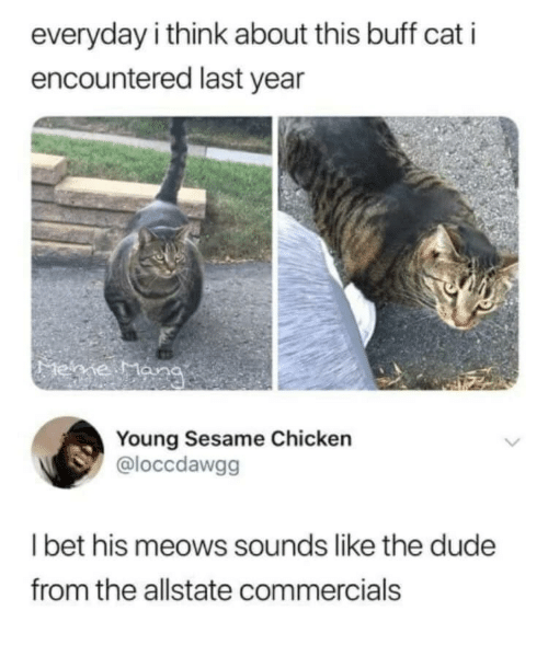 Dude, I Bet, and Allstate: everyday i think about this buff cat i  encountered last year  Young Sesame Chicken  @loccdawgg  I bet his meows sounds like the dude  from the allstate commercials