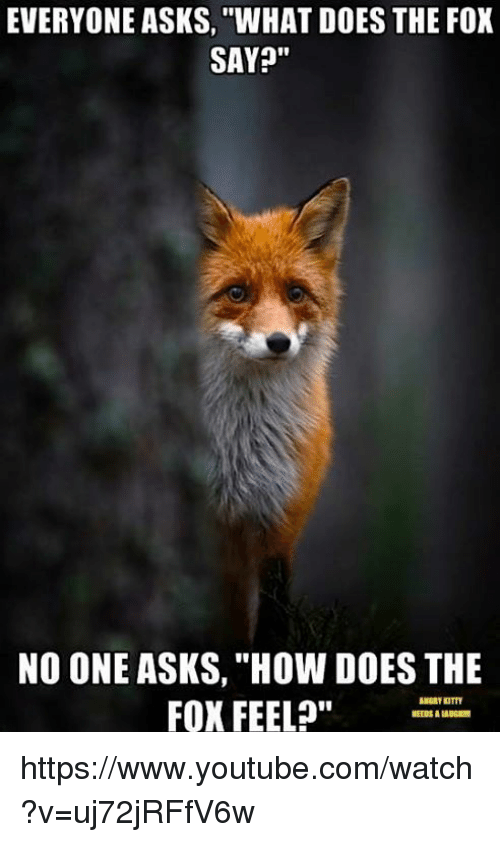 "Memes, youtube.com, and Watch: EVERYONE ASKS, WHAT DOES THE FOX  SAY?""  NO ONE ASKS, ""HOW DOES THE  FOX FEEL?""  NEEDS A LAUGIm https://www.youtube.com/watch?v=uj72jRFfV6w"