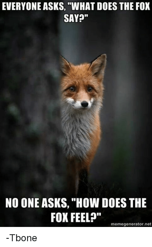 """Memes, What Does, and What Does the Fox Say: EVERYONE ASKS, """"WHAT DOES THE FOX  SAY?""""  NO ONE ASKS, """"How DOES THE  FOX FEEL?""""  memegenerator.net -Tbone"""
