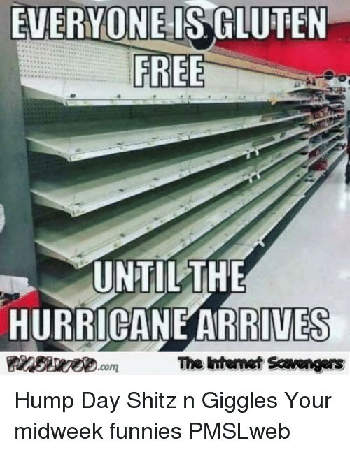 Hump Day, Free, and Gluten: EVERYONE IS GLUTEN  FREE  UNTILTHE  HURRICANE ARRIVES  The ntemet Scavengers <p>Hump Day Shitz n Giggles  Your midweek funnies  PMSLweb </p>