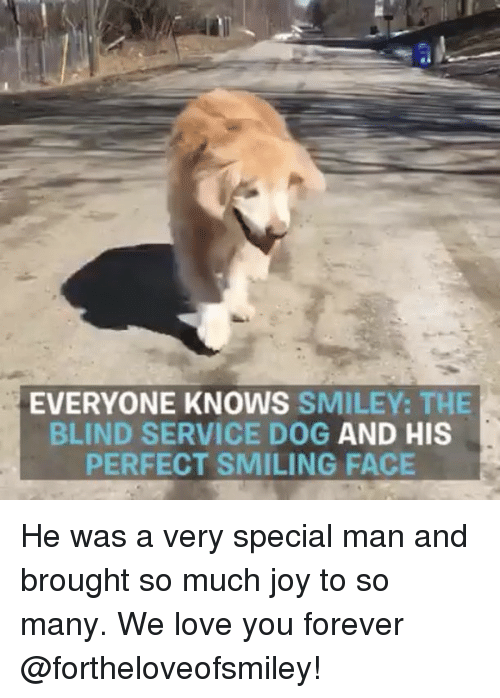Love, Memes, and Forever: EVERYONE KNOWS SMILEY: THE  BLIND SERVICE DOG AND HIS  PERFECT SMILING FACE He was a very special man and brought so much joy to so many. We love you forever @fortheloveofsmiley!