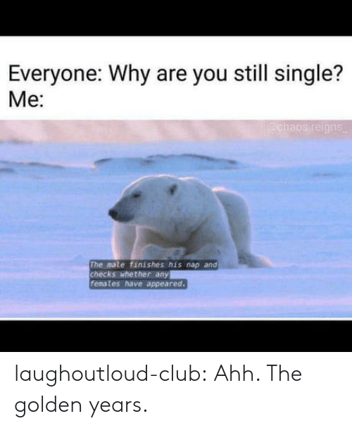 Club, Tumblr, and Blog: Everyone: Why are you still single?  Me:  The mate finishes his nap and  checks whether any  femates have appeared laughoutloud-club:  Ahh. The golden years.