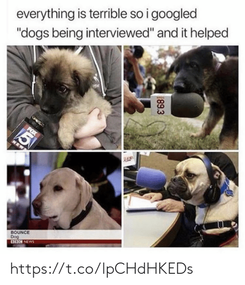 "Dogs, Memes, and News: everything is terrible so i googled  ""dogs being interviewed"" and it helped  FOX  5  NEW  BOUNCE  Dog  BO NEWS  89.3 https://t.co/lpCHdHKEDs"