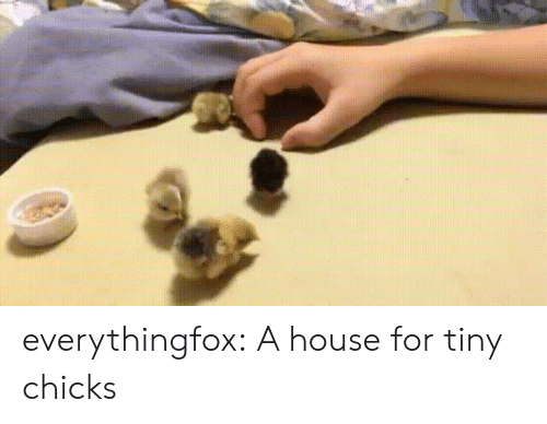 Tumblr, Blog, and House: everythingfox: A house for tiny chicks