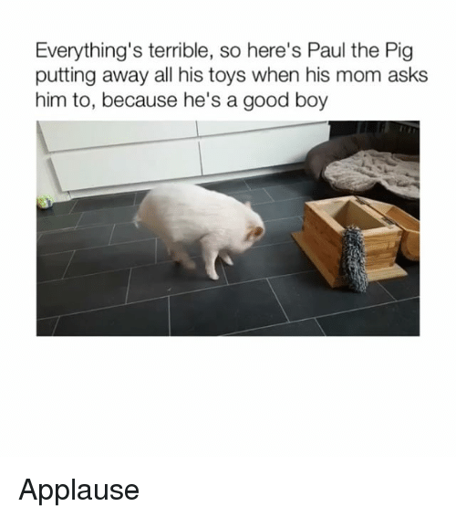 Memes, Good, and Toys: Everything's terrible, so here's Paul the Pig  putting away all his toys when his mom asks  him to, because he's a good boy Applause