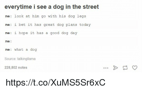 I Bet, Memes, and 🤖: everytime i see a dog in the street  me look at him go with his dog legs  me: i bet it has  great dog plans today  me: i hope it has a good dog day  me  me: what a dog  Source: talkingllama  228,802 notes https://t.co/XuMS5Sr6xC